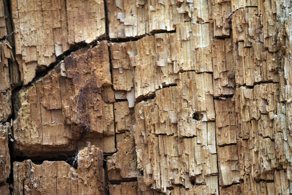 Wood with termites